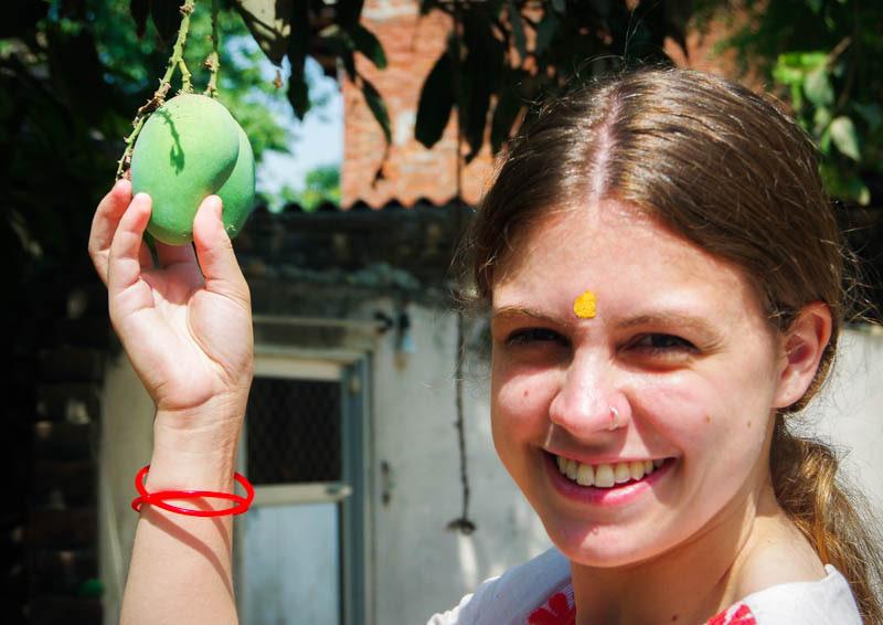 Langra Aam Mango Growing on a Tree